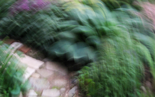Image 1014 My Garden Walk © Catherine Rutgers