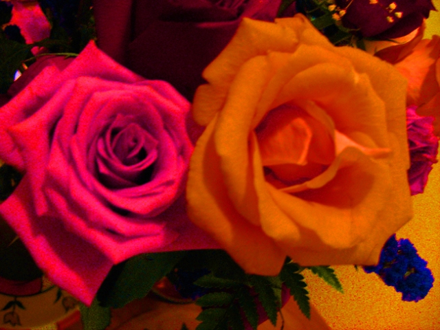 Two Roses © Catherine Rutgers 2011