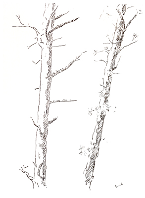 Two Pines Sketch 25 © Brian Olewnick
