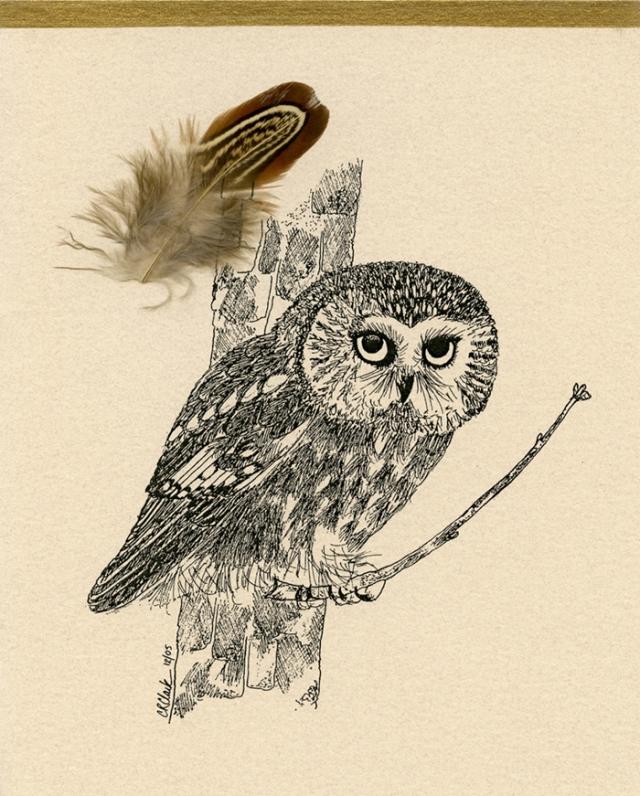 Saw-whet Owl 2005 © Carolyn Rutgers Clark