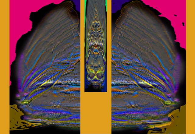One Cicada Life-like Gem © Catherine Rutgers 2012