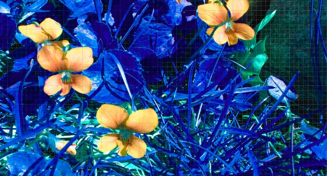 Grid Grab Yellow Blue © Catherine Rutgers 2012