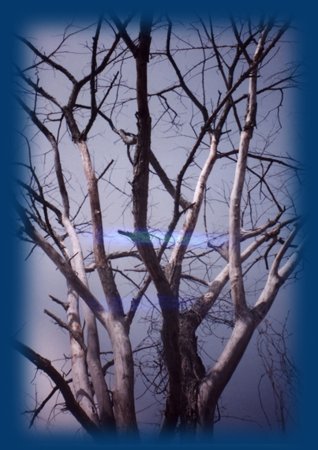 Reach to Blue © Catherine Rutgers 2012