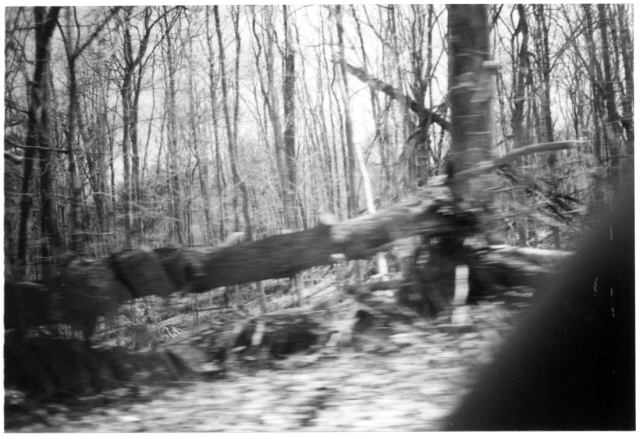 Film Noir © Catherine Rutgers 2012