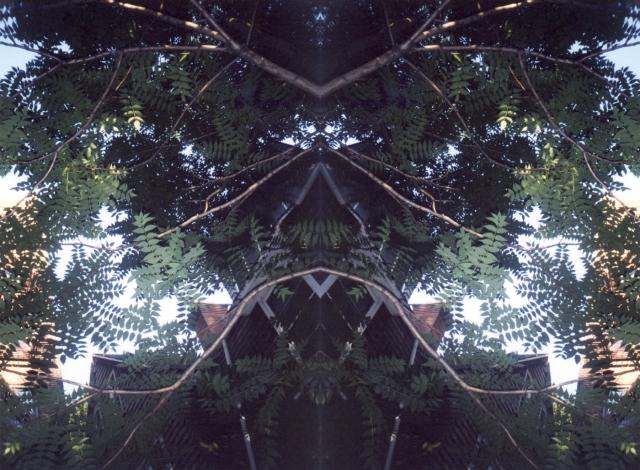 Ailanthus Spirit © Catherine Rutgers 2012