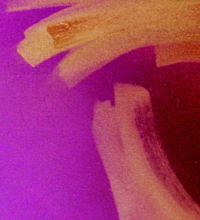 Fuchsia on the Rise © Catherine Rutgers 2013
