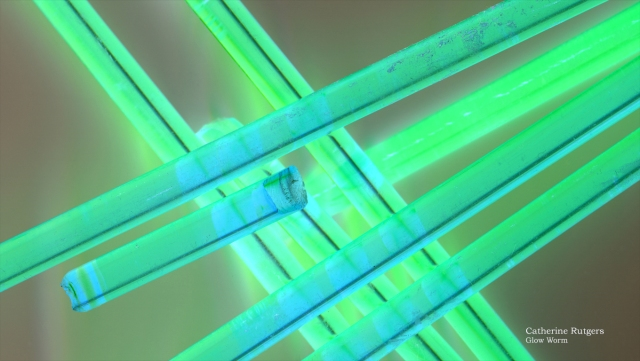 Glow Worm © Catherine Rutgers 2013