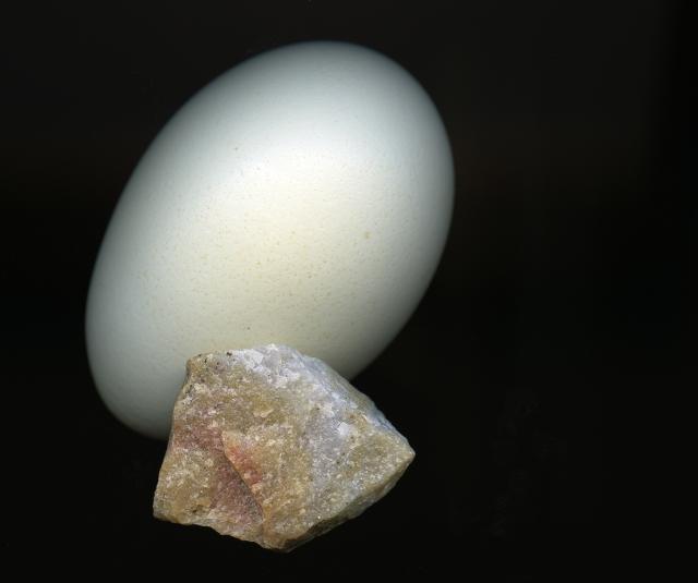 One Beautiful Egg © Catherine Rutgers 2013