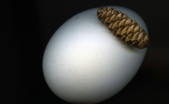 Egg and Cone © Catherine Rutgers 2013