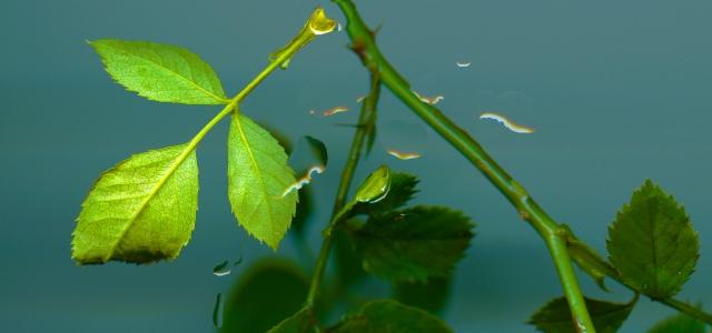 Greenery Boost © Catherine Rutgers 2013
