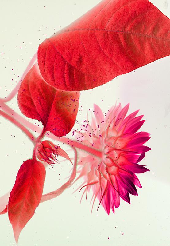 Sunflowered © Catherine Rutgers 2020