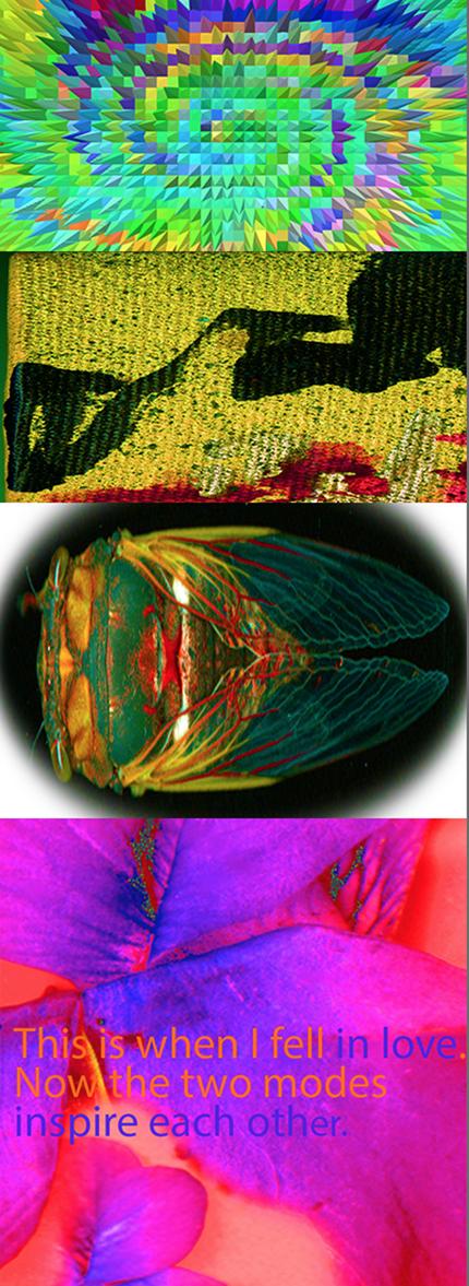 Cicada Love © Cat Rutgers 2020